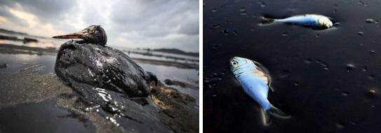 impacto ambiental - mar