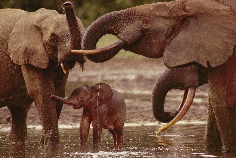 Relações Ecológicas - elefantes