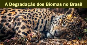 A Degradação dos Biomas Brasileiros