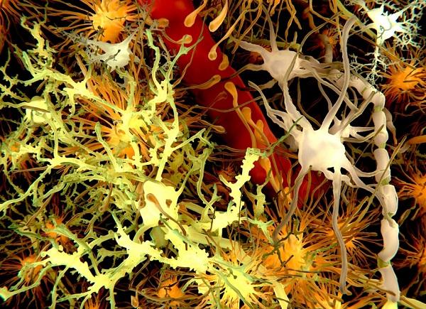 esquema de tecido nervoso