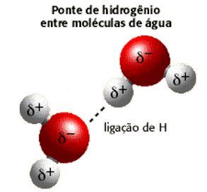 Ponte de hidrogênio entre moléculas de água