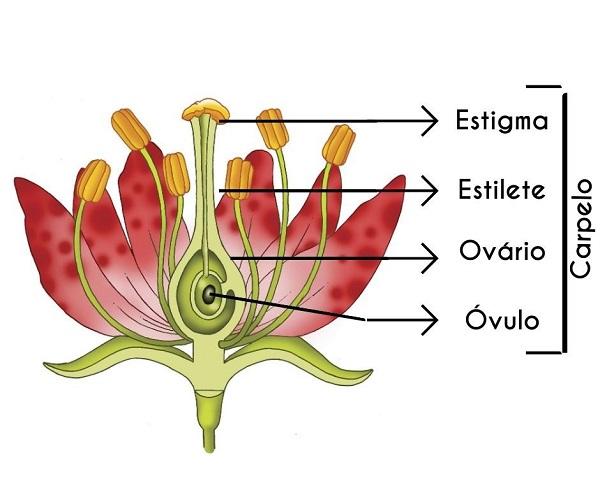 Estrutura de uma flor