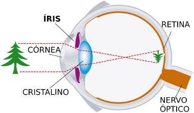 Formação de imagens no olho humano