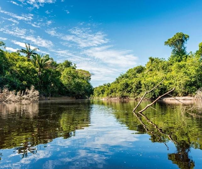 Bacia amazônica - região norte