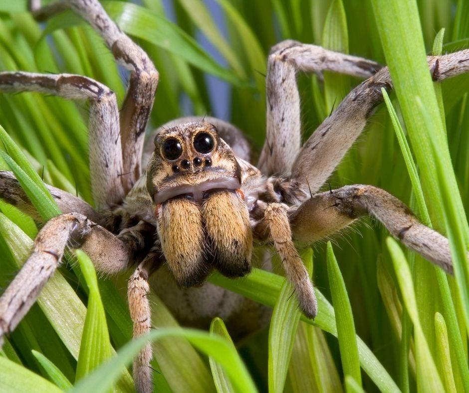 Aranha classe dos aracnídeos