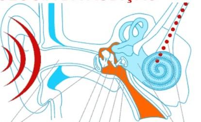 Fisiologia do som dentro da orelha humana
