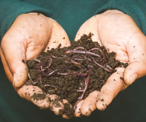 Húmus de minhoca - Anelídeos