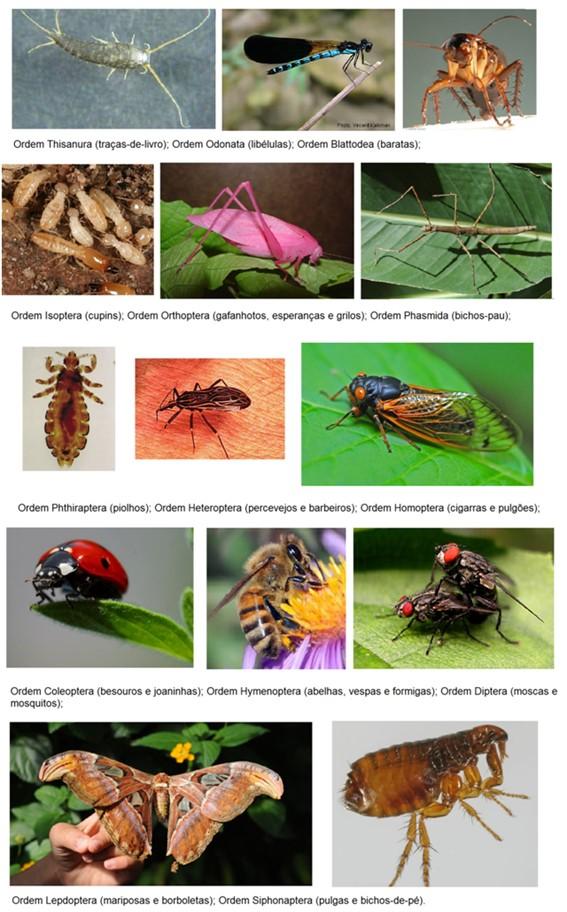 Ordens dos insetos