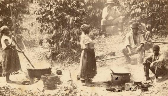 Trabalhadores negros numa plantação de café
