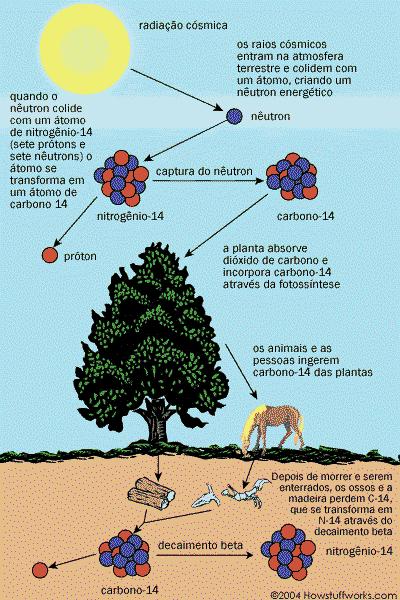 processo de renovação do carbono 14 na natureza