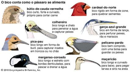 Tipos de bicos de aves