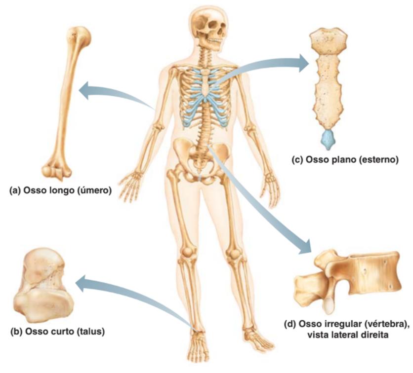 Formatos de ossos