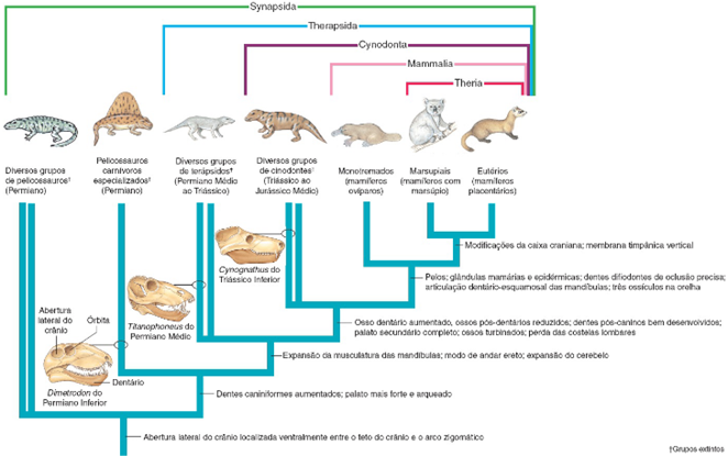 Grupos de mamíferos