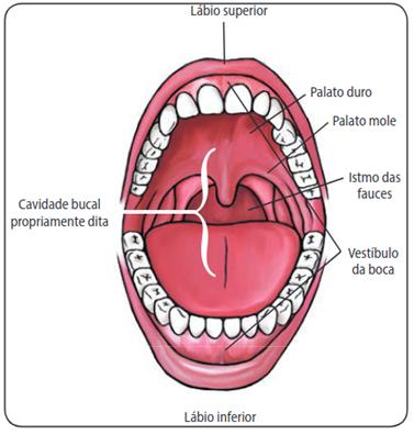 Limites da cavidade oral