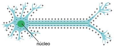 Membrana celular