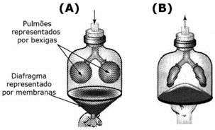 Representação do sistema respiratório