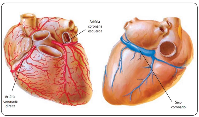 Artérias no coração